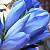 花と緑の写真集